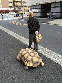 Этому человеку хватает терпения выгуливать необычного домашнего питомца по улицам Токио!
