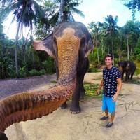 Слон украл телефон у туриста. То, что он сделал с ним потом, просто не укладывается в голове!