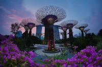 Сады будущего и супердеревья в Сингапуре