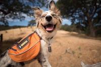 20 чудных снимков из Instagram, которые вдохновят вас отправиться в поход со своей собакой