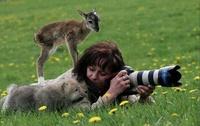 19 фотографов дикой природы, которые в своей работе идут до конца