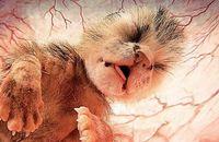 15 фотографий животных в утробе матери
