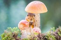 Под пристальным взором природы: 19 проникновенных снимков
