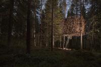 17 снимков Treehotel — самого необычного места для отдыха