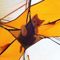 15 потешных снимков, которые вдохновят тебя отправиться в поход с котом