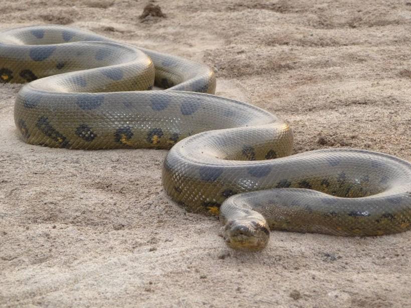 картинки длинная змея тем самым