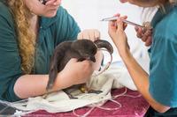 Как лечат животных в Израиле