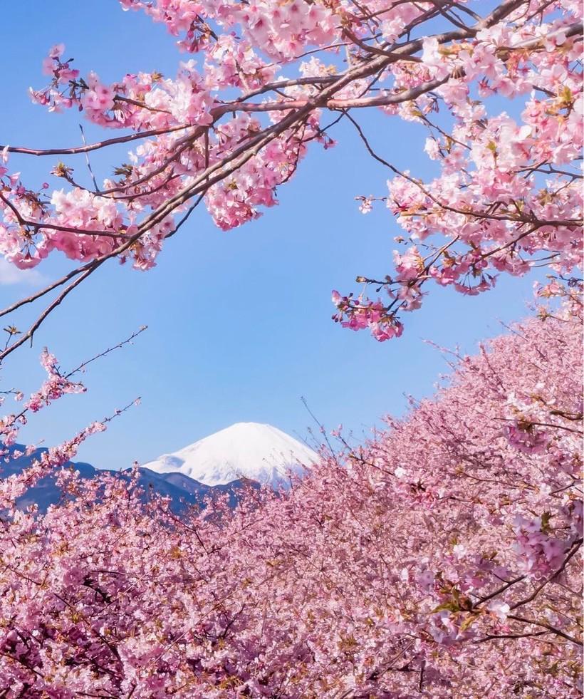 японская картинки весны в японии сделать денежный