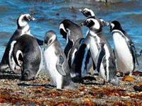 Места обитания пингвинов на карте мира