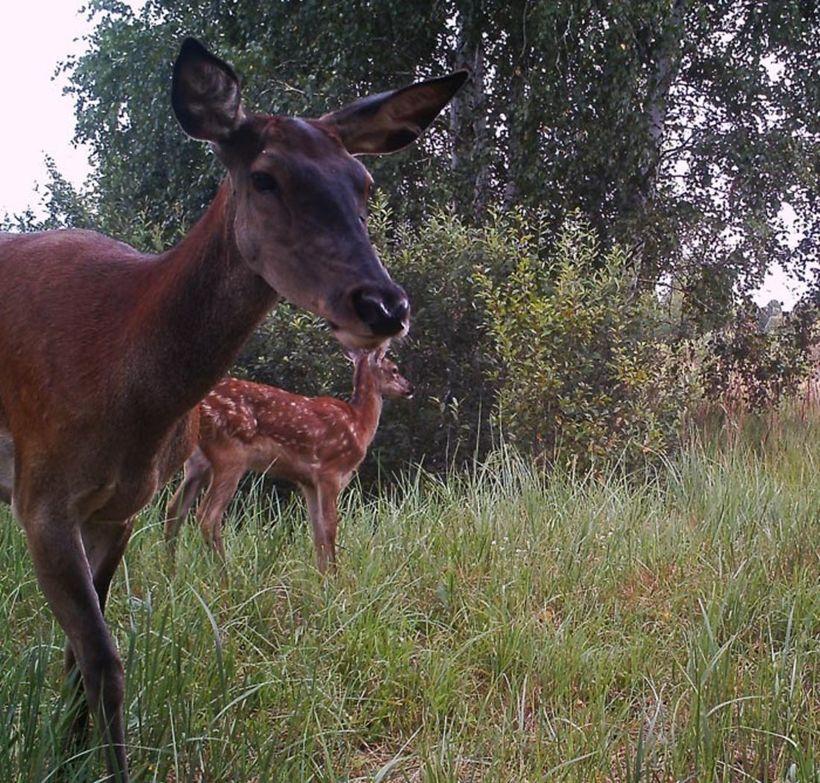 Чернобыль там живут животные фото