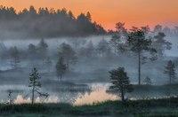 какую территорию занимают болота в россии