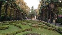 Пальмовая аллея в Сочи