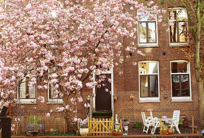 Май в Амстердаме