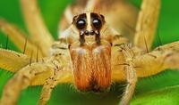 Как расположены глаза у паука