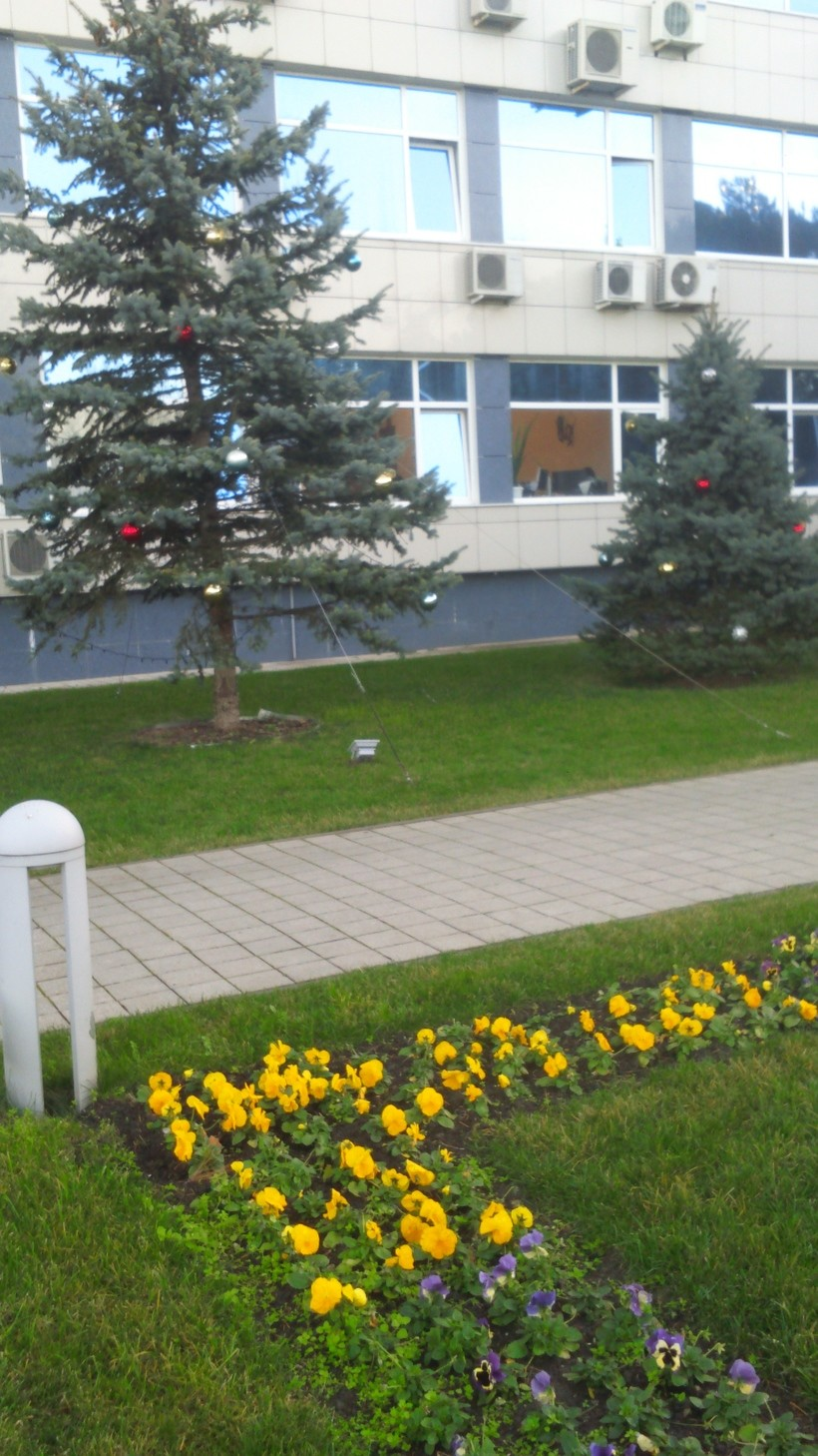 Сочетание цветов и новогодней елки для Анапы - норма.