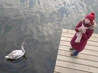 Лебедь на озере Мэларен