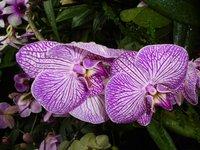 Цветущие орхидеи в саду Kew