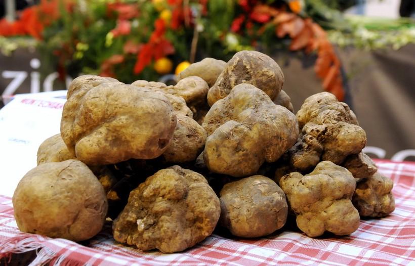 Трюфели: почему самые дорогие грибы в мире могут найти только свиньи и собаки
