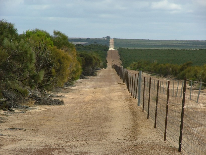 «Великая австралийская стена»: оборона против самого опасного хищника на континенте