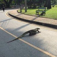 Рептилоид на прогулке