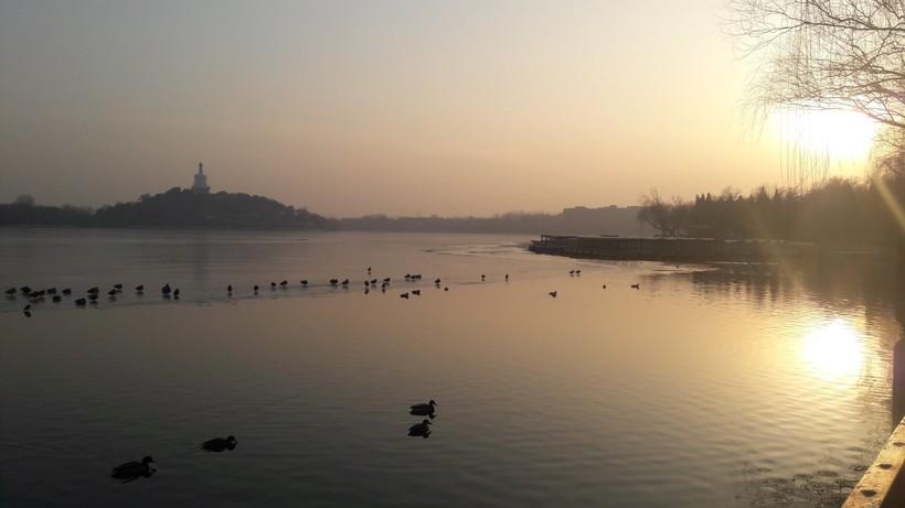Практически утка по-пекински