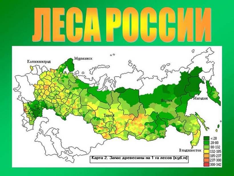 регионов россии занимают леса геткурс служба поддержки 8800