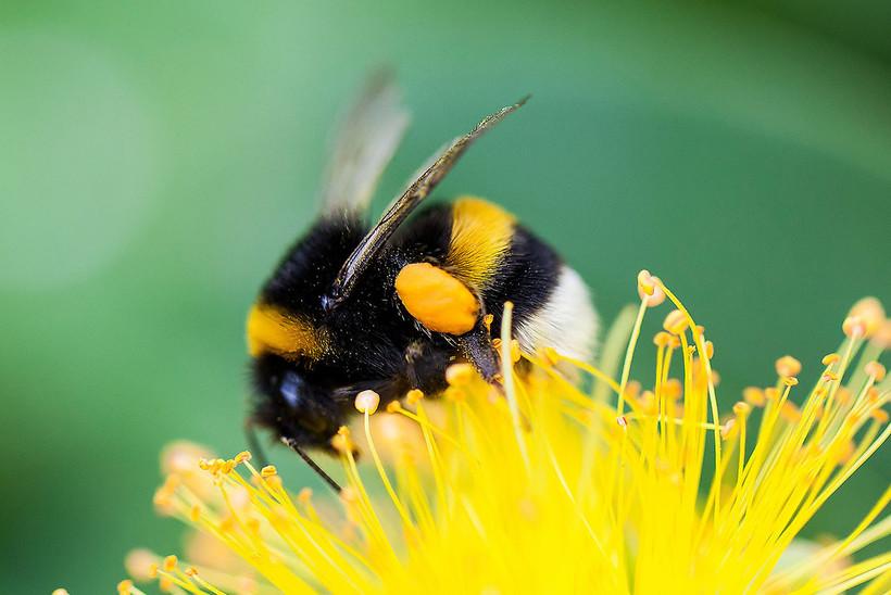 карте пчелы и шмели фото картинки вашей