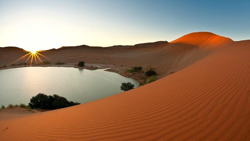 оазисы в пустыне сахара фото экспозиции посвятили живым