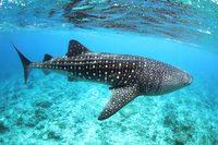 Подводный Фестиваль в Lux* South Ari Atoll