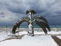 Заснеженная пальма в феврале в Абхазии