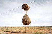 Выдающиеся архитекторы: таких гнезд не умеет строить больше никто из пернатых