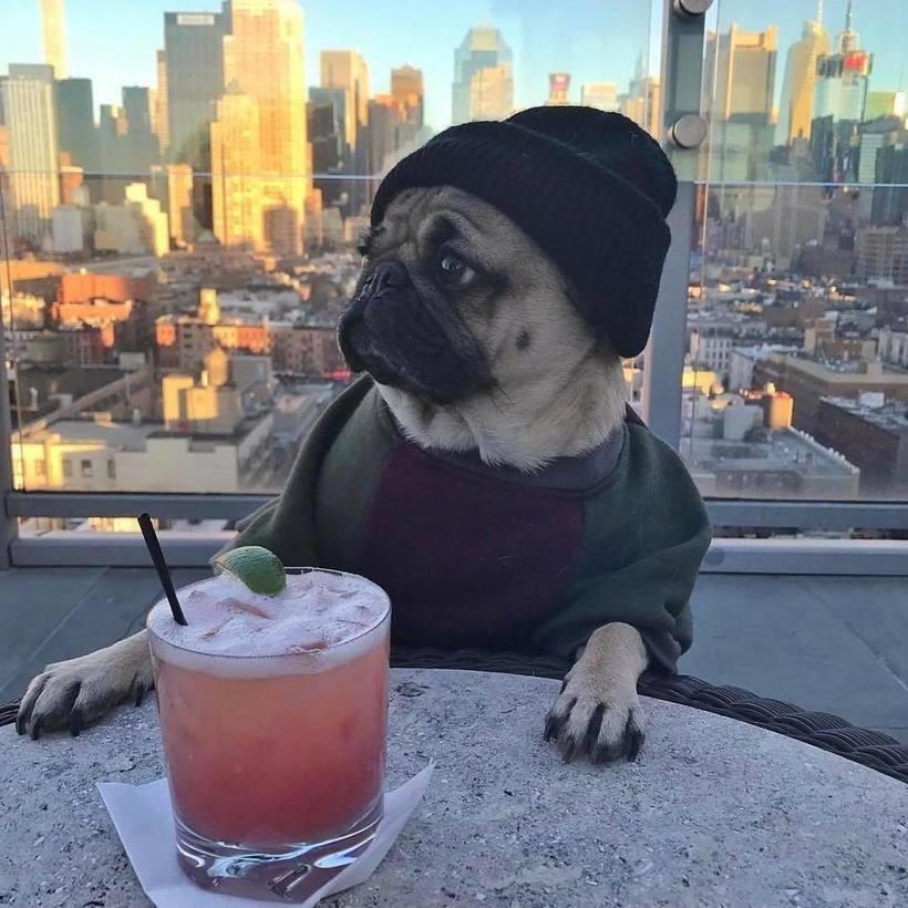 10 самых популярных собак из Instagram