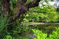Дублинский парк Сант-Стивенс-Грин