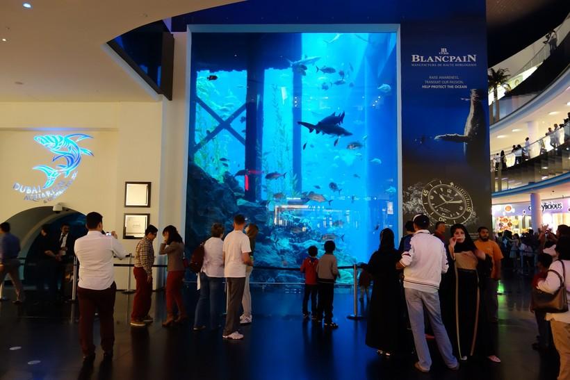 ОАЭ, Дубай: экскурсия в аквариум