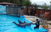 Дельфинарий в Пицунде летом
