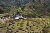 Рисовые поля Вьетнама осенью