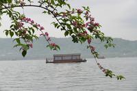 В марте в Ханчжоу расцветают деревья