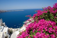В апреле В Греции все усыпано такими красивыми цветами