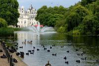 Май в Сент-Джеймс парке, Лондон
