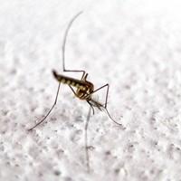 Как защитить себя от комаров в Азии
