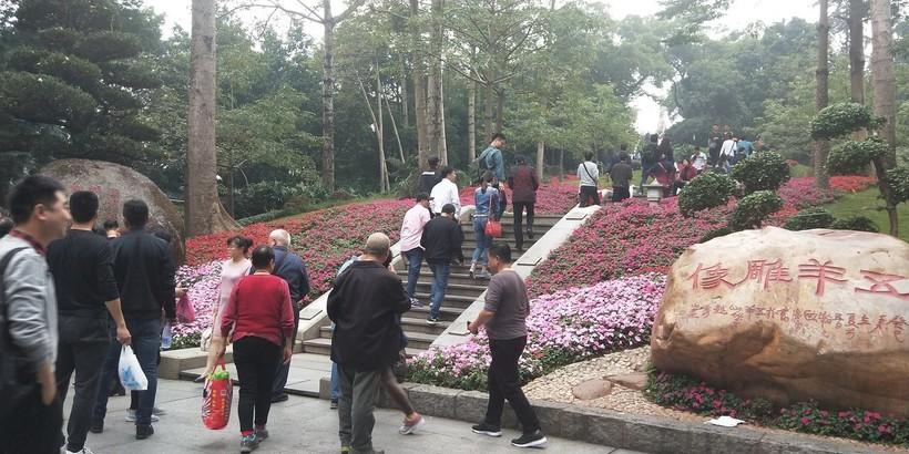 Зимой в Гуанчжоу вовсю цветут цветы, январь 2019