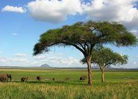 Национальный парк в Танзании
