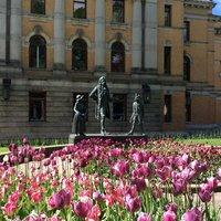 Майские тюльпаны в Осло