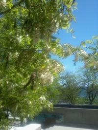 Цветущий Таганрог в мае