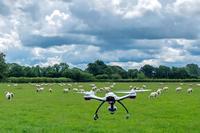 Они пасут овец, работают в ресторане и выгоняют японцев с работы: 7 необычных дронов
