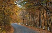 Симферополь: прогулка по осеннему лесу