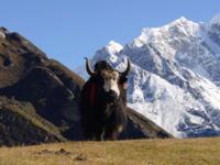 Животные Национального парка Сагарматха