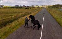 20 лучших случайно сделанных снимков животных от Google Street View