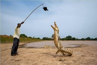 Для одних — монстр, для других — друг: места, где крокодилов считают безобидными