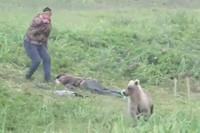 Любопытный медвежонок разбудил задремавших мужчин и чуть не довел их до истерики